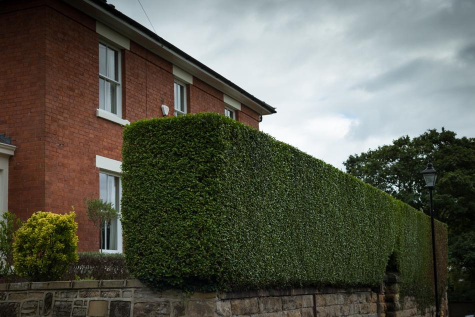 Privet Hedge Trim, Mickleover 02