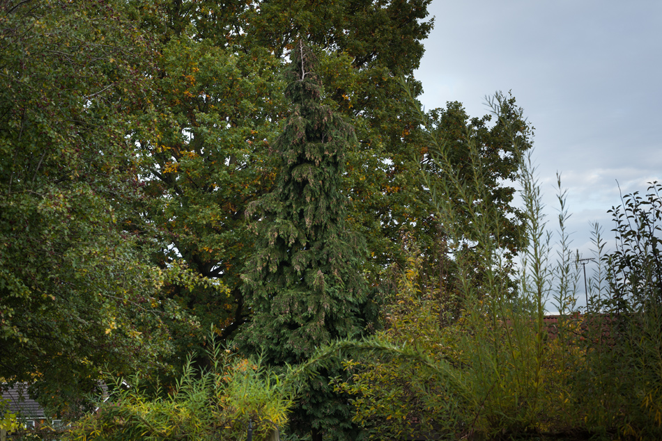 conifer removal feature