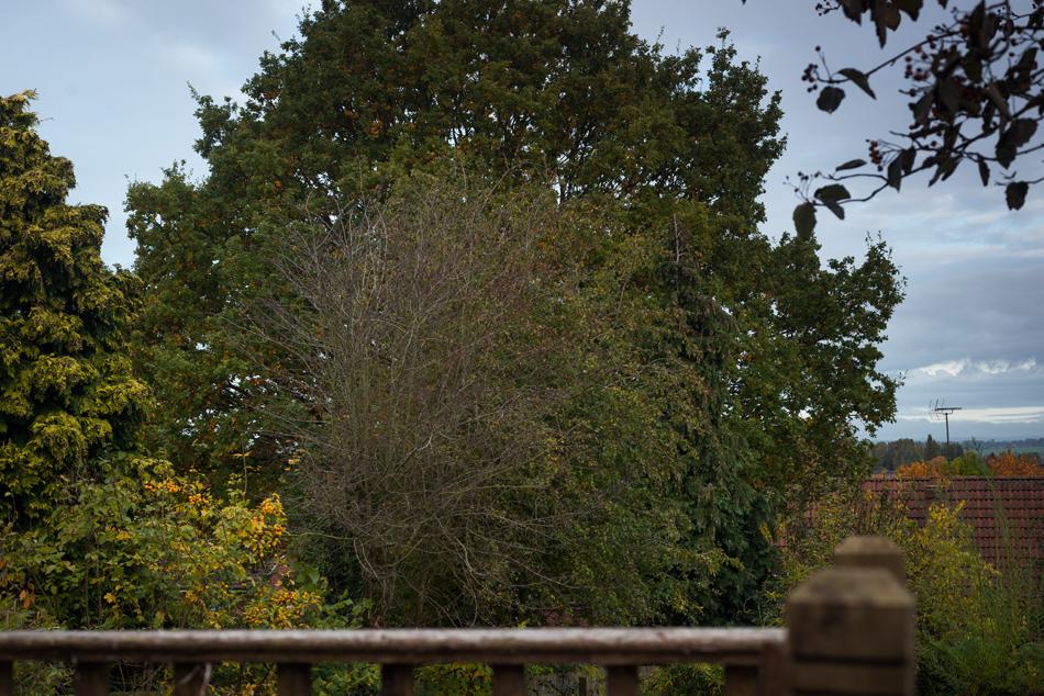 hawthorn pollard littleover 01