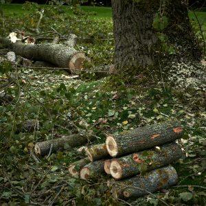 Tree Surgery Derbyshire