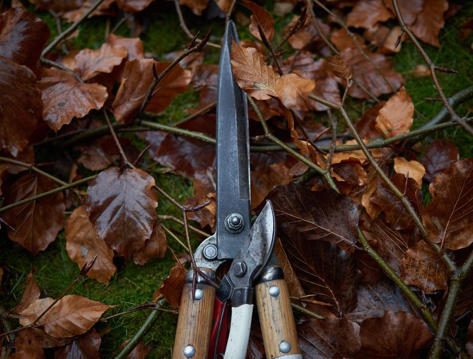 Beech Hedge Reduction, Kings Newton, Derbyshire 01