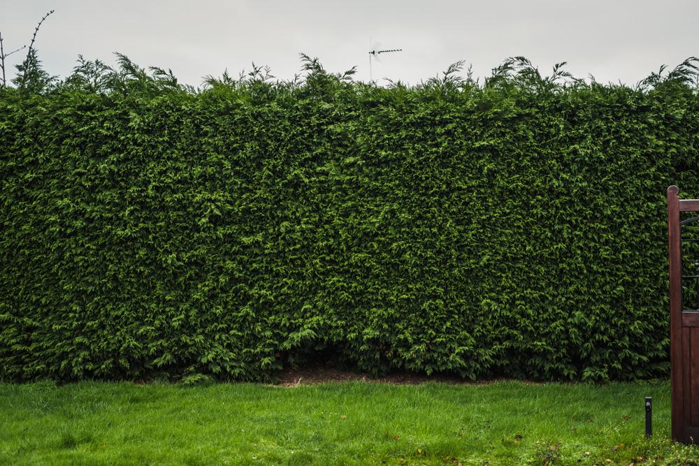 Large Conifer Trim Barrow on Trent Derby © Gardenscape, Derby 07