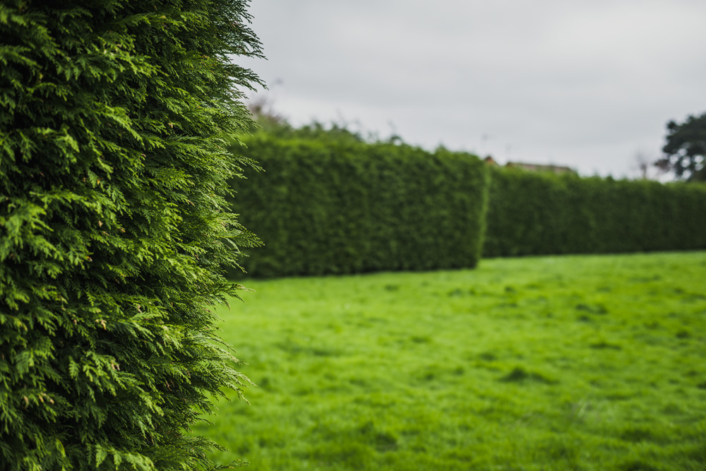 Large Conifer Trim Barrow on Trent Derby © Gardenscape, Derby 03