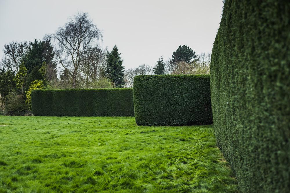 Large Conifer Trim Barrow on Trent Derby © Gardenscape, Derby 10