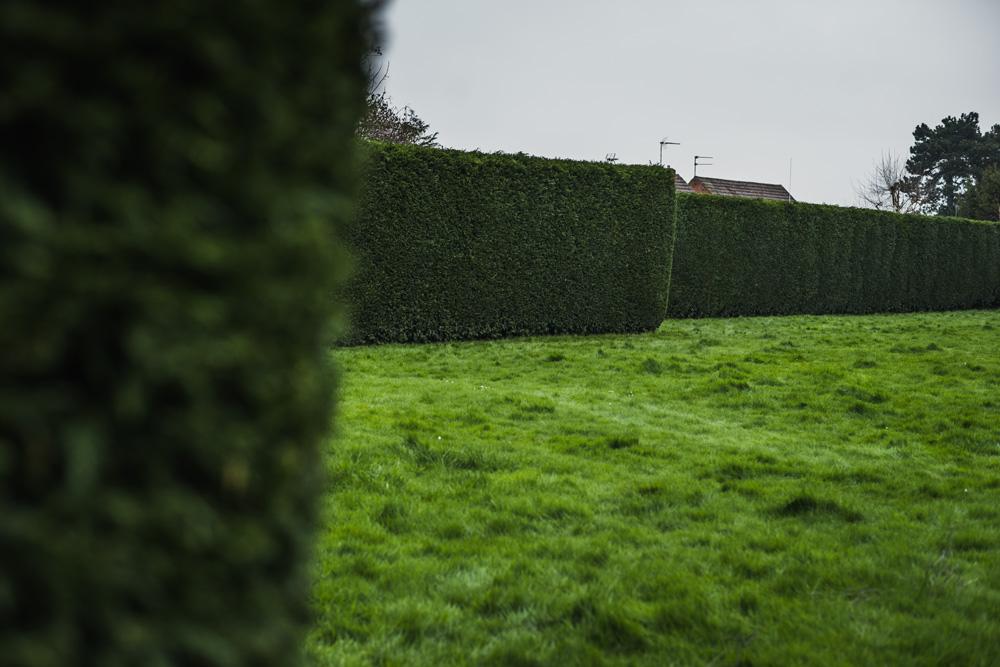 Large Conifer Trim Barrow on Trent Derby © Gardenscape, Derby 12