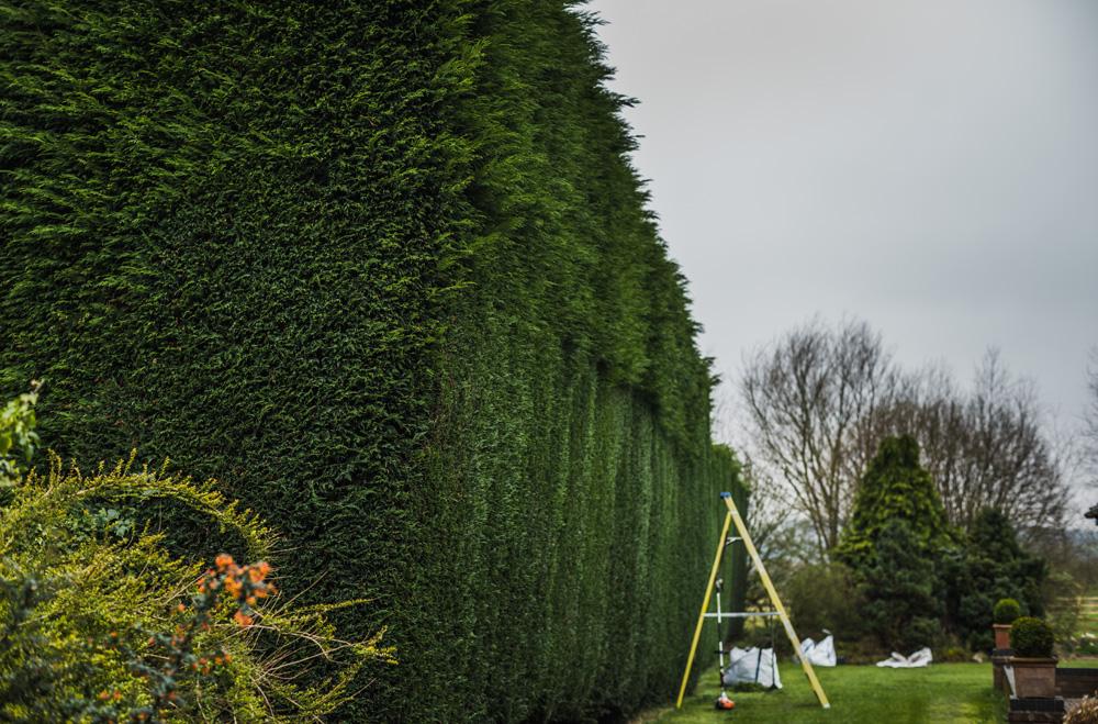 Large Conifer Trim Barrow on Trent Derby © Gardenscape, Derby 13