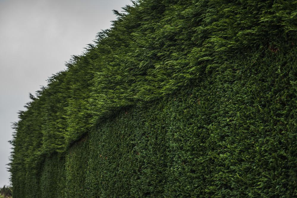 Large Conifer Trim Barrow on Trent Derby © Gardenscape, Derby 16