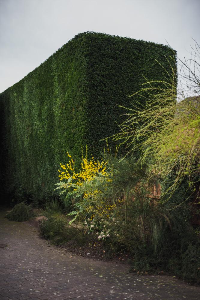 Large Conifer Trim Barrow on Trent Derby © Gardenscape, Derby 18