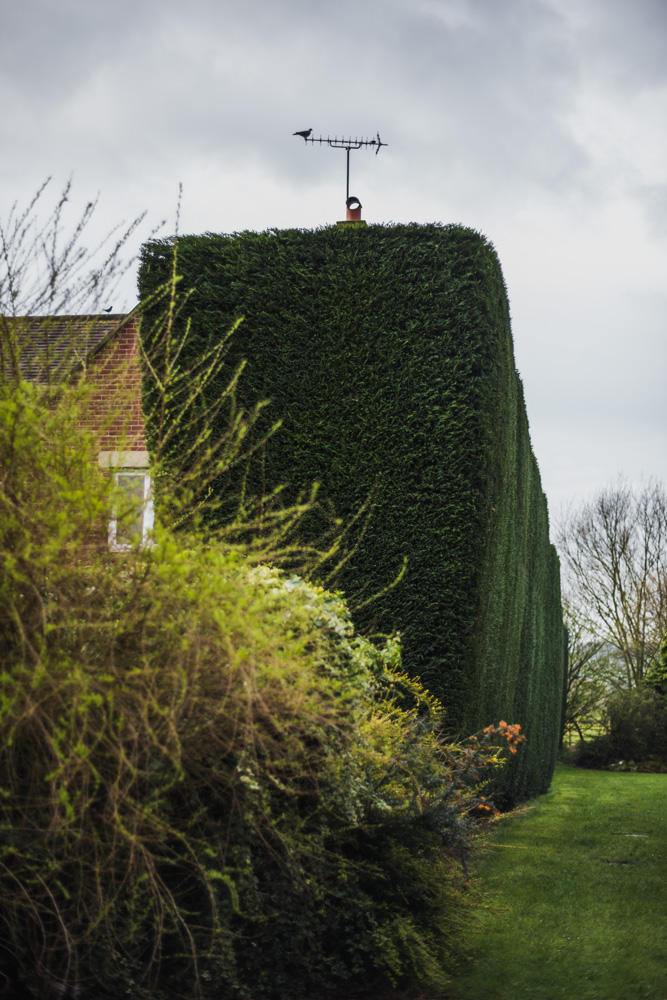Large Conifer Trim Barrow on Trent Derby © Gardenscape, Derby 19