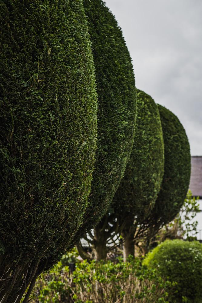 Borrowash Lane Leylandii Shaping © Gardenscape 007