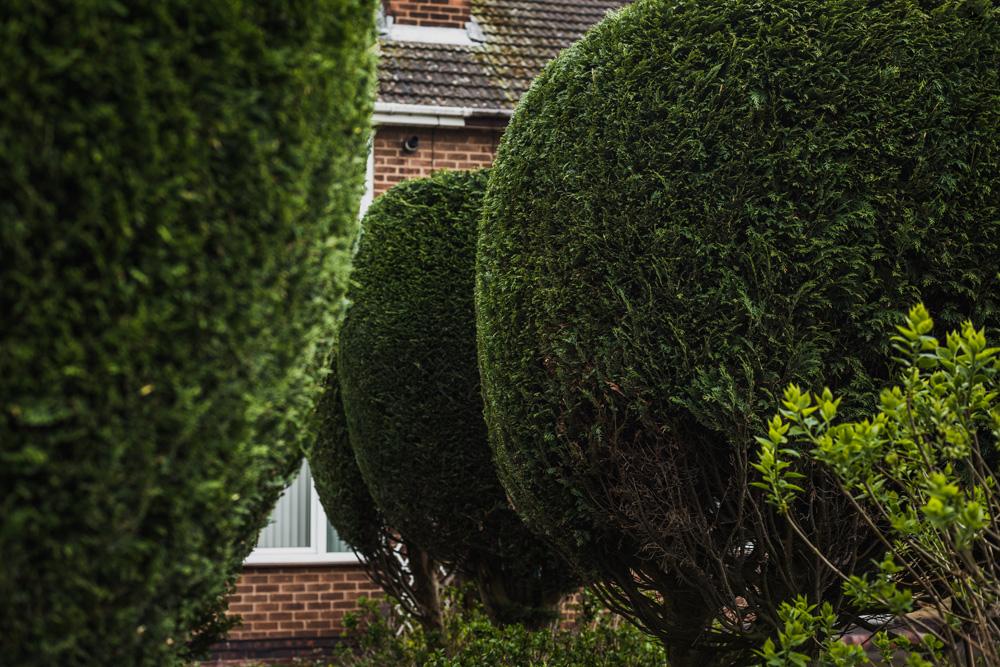 Borrowash Lane Leylandii Shaping © Gardenscape 008
