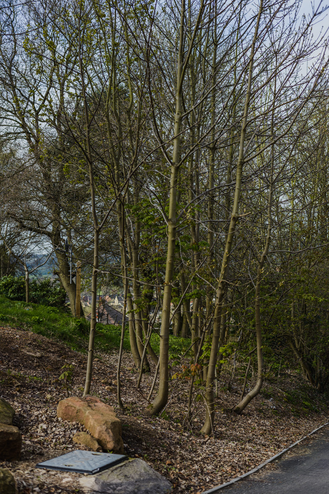 Woodland Clean Up Little Eaton © Gardenscape 02