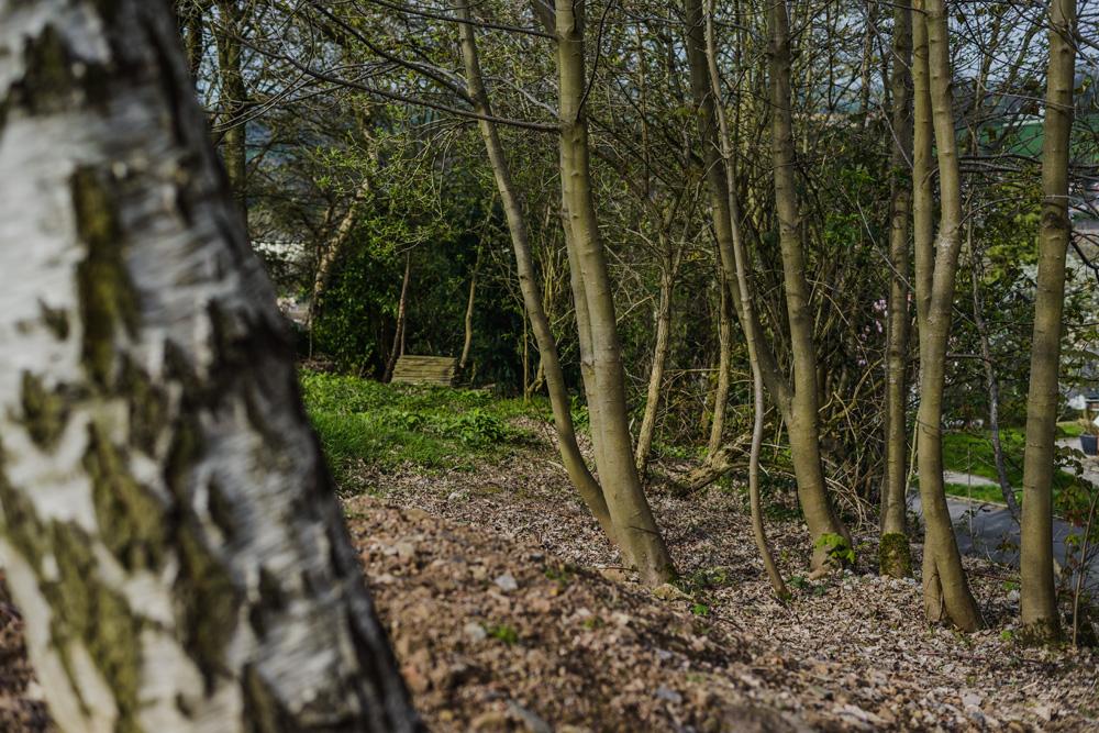 Woodland Clean Up Little Eaton © Gardenscape 03