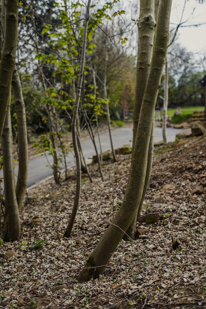 Woodland Clean Up Little Eaton © Gardenscape 04
