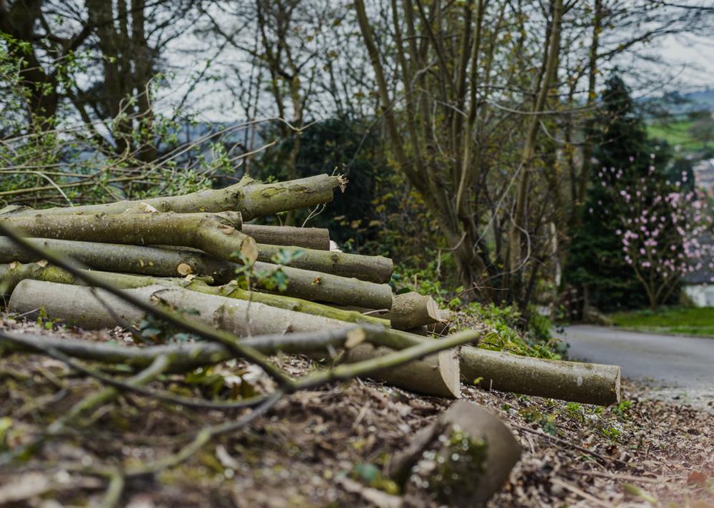 Woodland Clean Up Little Eaton © Gardenscape 06