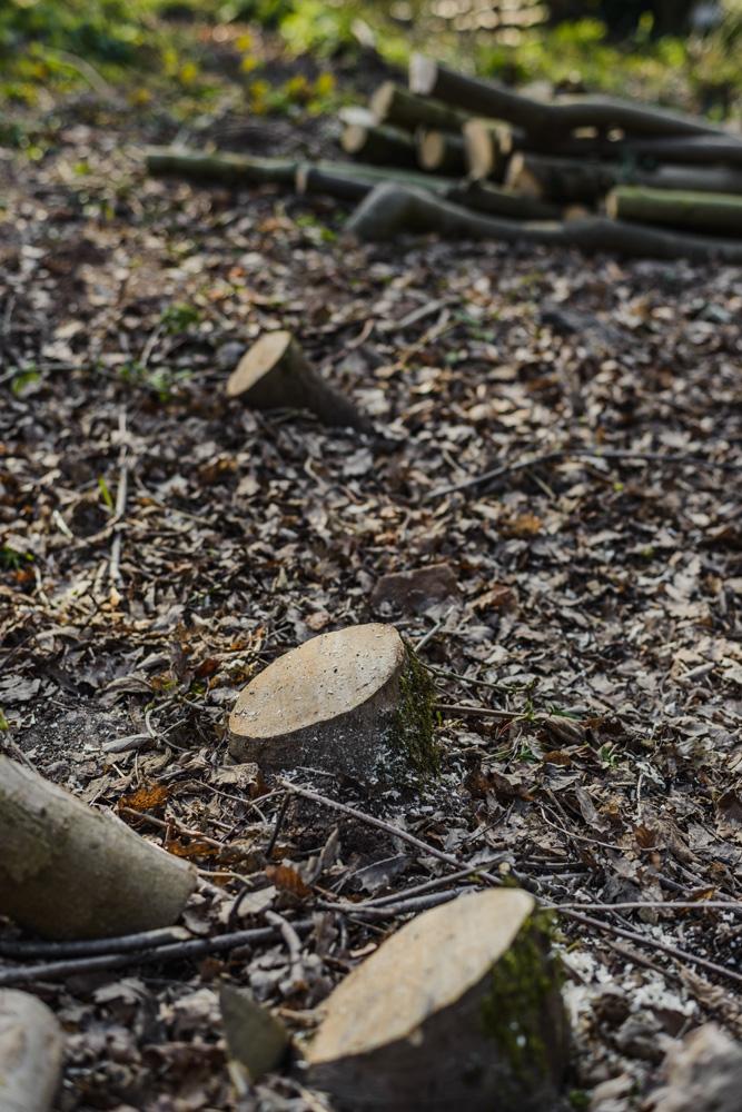 Woodland Clean Up Little Eaton © Gardenscape 11