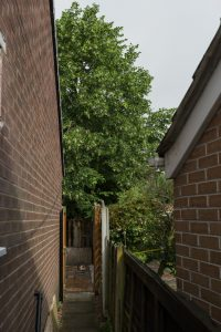 Lime Tree Removal Littleover © Gardenscape 01
