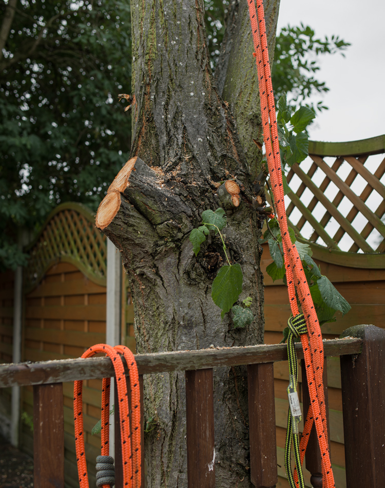 Lime Tree Removal Littleover © Gardenscape 06
