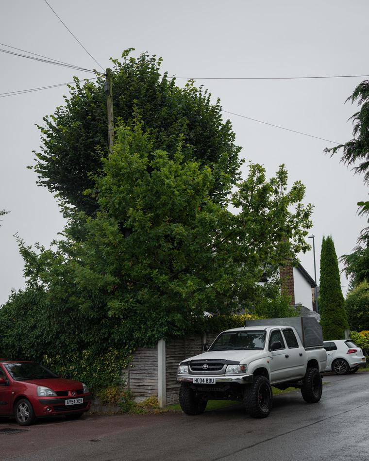 30ft Lime Tree Removal, Mickleover 00