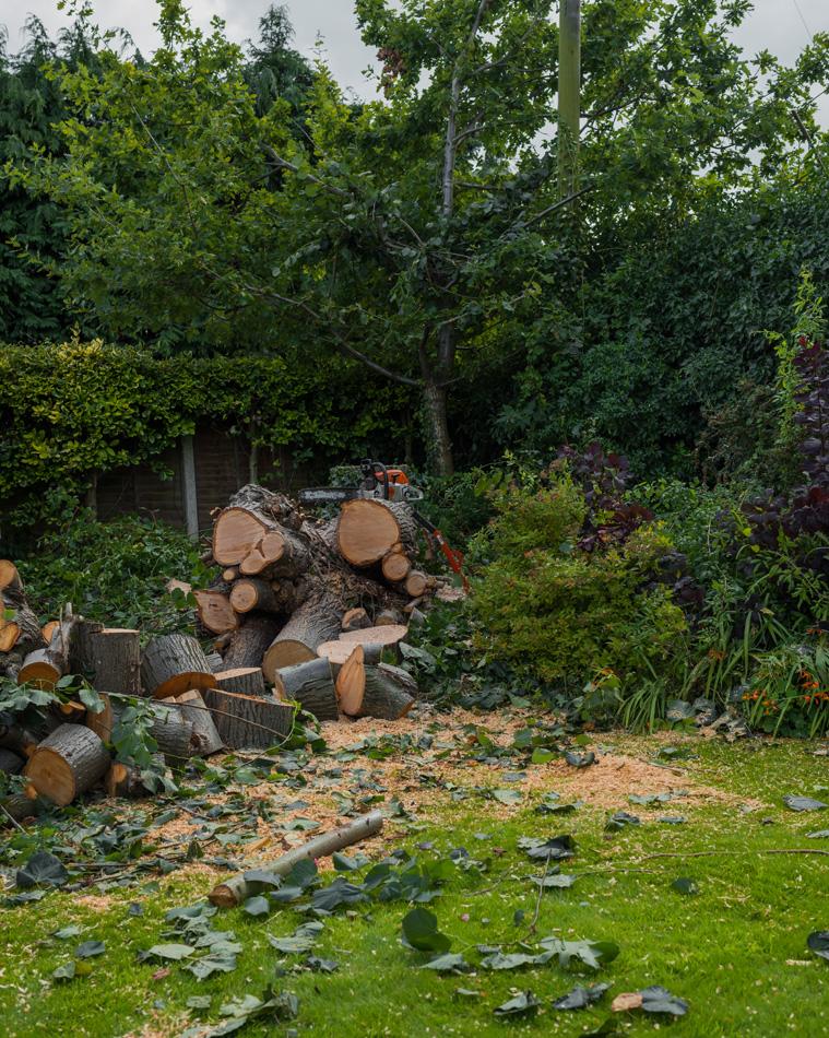 30ft Lime Tree Removal, Mickleover 05