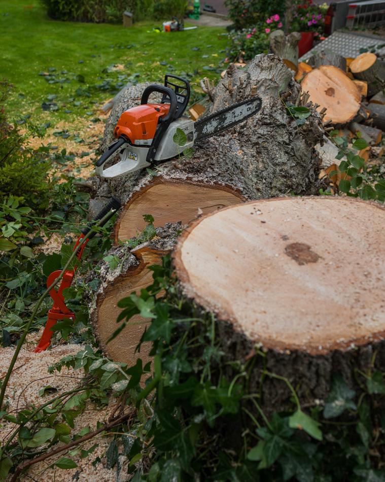 30ft Lime Tree Removal, Mickleover 07