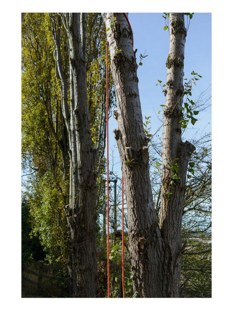 Lombardy Poplar Crown Lift © Gardenscape 03