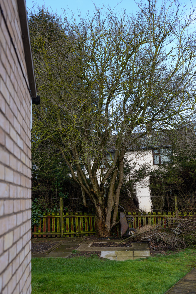 Various Tree Removal Mackworth © Gardenscape 02