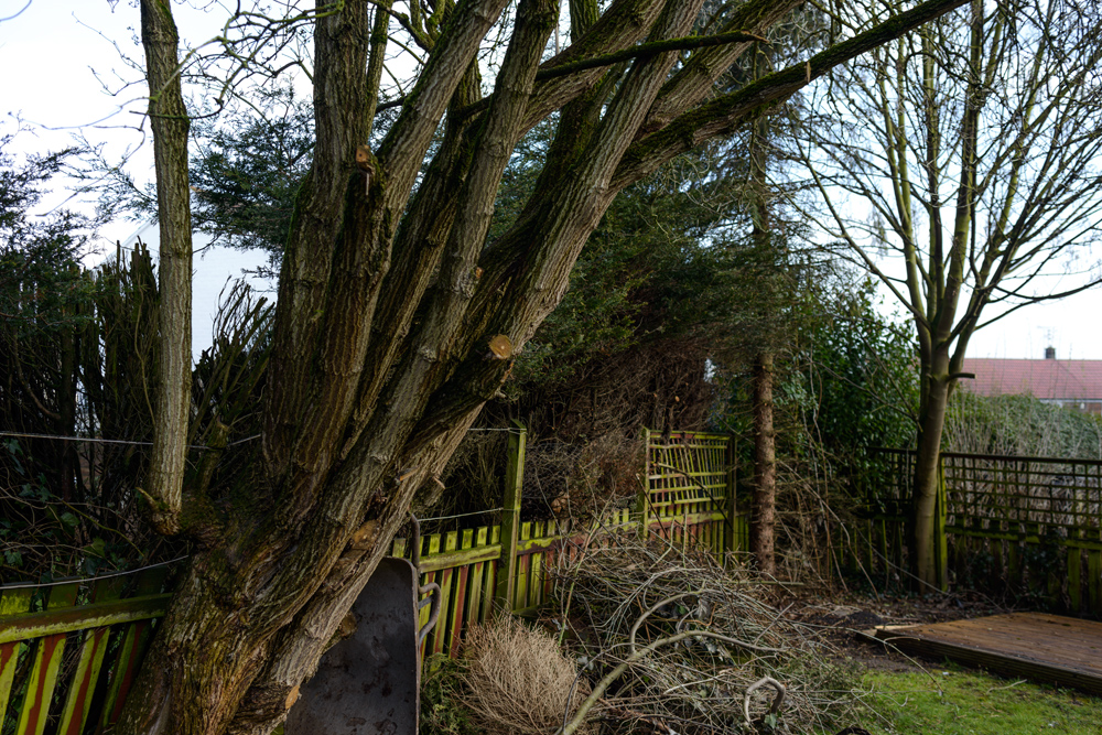 Various Tree Removal Mackworth © Gardenscape 03