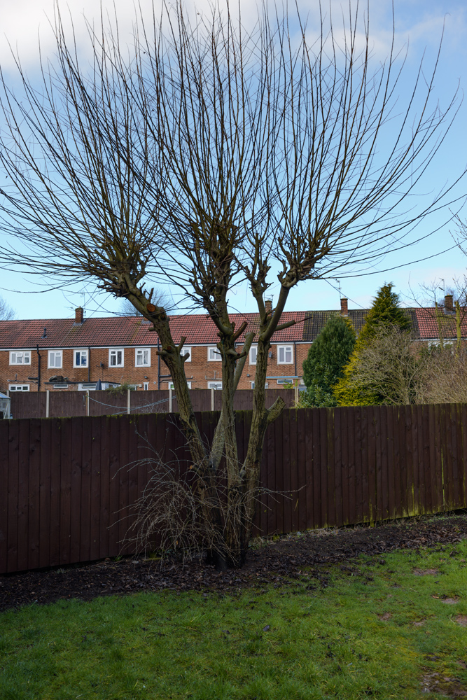 Various Tree Removal Mackworth © Gardenscape 04