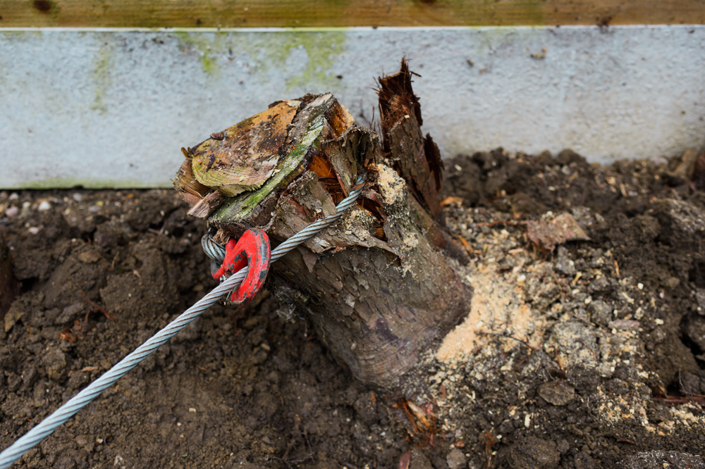 Conifer Stump Removal, Oakwood © Gardenscape 03
