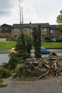 yew tree chellaston © Gardenscape, Derby_002