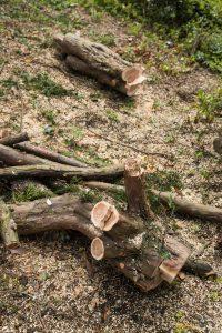 yew tree chellaston © Gardenscape, Derby_003