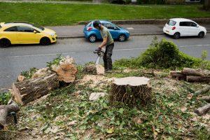 yew tree chellaston © Gardenscape, Derby_004