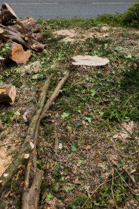 yew tree chellaston © Gardenscape, Derby_008