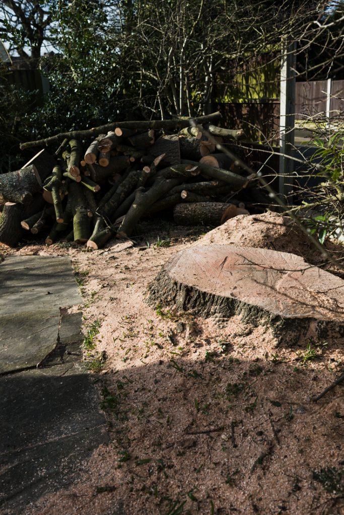 Ash Tree Removal, Littleover © Gardenscape, Derby