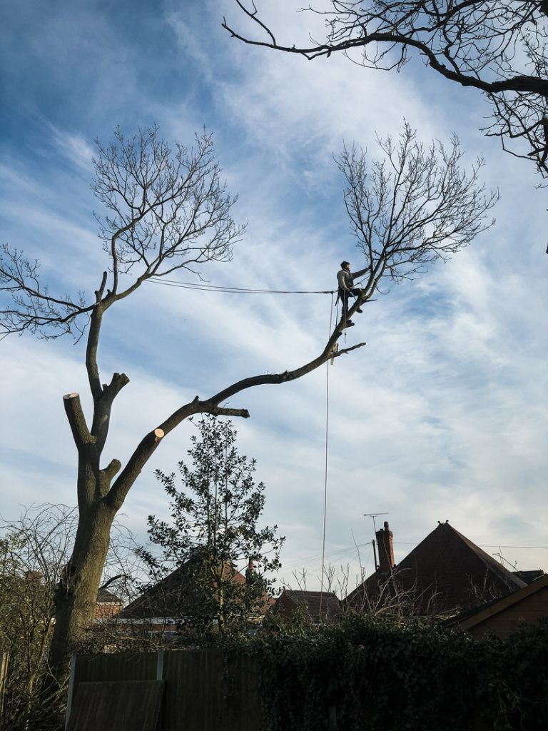 Ash Tree Removal, Littleover © Gardenscape, Derby